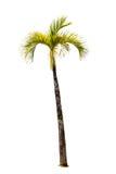 Δέντρο στην άσπρη ανασκόπηση στοκ εικόνες με δικαίωμα ελεύθερης χρήσης