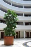 Δέντρο στην αίθουσα Στοκ εικόνα με δικαίωμα ελεύθερης χρήσης