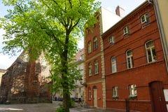 Δέντρο στην αγορά Στοκ Φωτογραφίες