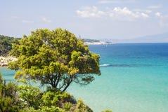 Δέντρο στην ακτή του Αιγαίου πελάγους (Ελλάδα) Στοκ εικόνα με δικαίωμα ελεύθερης χρήσης
