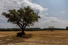 Δέντρο στην επαρχία στοκ φωτογραφίες