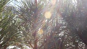 Δέντρο στην ηλιόλουστη ημέρα απόθεμα βίντεο