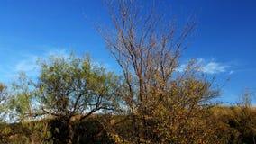 Δέντρο στην κλίση με το μπλε ουρανό Στοκ εικόνα με δικαίωμα ελεύθερης χρήσης