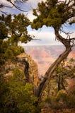 Δέντρο στην κορυφή του μεγάλου φαραγγιού στοκ εικόνες με δικαίωμα ελεύθερης χρήσης