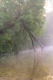 Δέντρο στην ομίχλη πρωινού Στοκ φωτογραφία με δικαίωμα ελεύθερης χρήσης