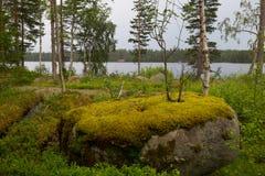 Δέντρο στην πέτρα Στοκ φωτογραφία με δικαίωμα ελεύθερης χρήσης