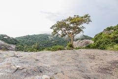 Δέντρο στην πέτρα Στοκ εικόνα με δικαίωμα ελεύθερης χρήσης