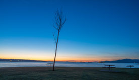 Δέντρο στην παραλία στοκ εικόνες