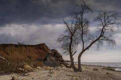 Δέντρο στην παραλία Στοκ Φωτογραφία