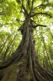 Δέντρο στην πράσινη ζούγκλα Στοκ Εικόνες