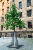 Δέντρο στην προστασία metall στην οδό της Δρέσδης Στοκ εικόνα με δικαίωμα ελεύθερης χρήσης
