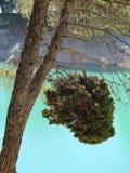Δέντρο στην τράπεζα δεξαμενών Στοκ Εικόνα