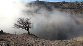 Δέντρο στην υδρονέφωση απόθεμα βίντεο