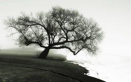 Δέντρο στην όχθη ποταμού Στοκ φωτογραφία με δικαίωμα ελεύθερης χρήσης