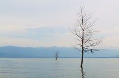 Δέντρο στη λίμνη Στοκ Φωτογραφία