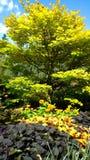 Δέντρο στη βασίλισσα Elizabeth Park Στοκ φωτογραφία με δικαίωμα ελεύθερης χρήσης