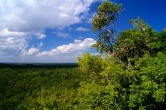 Δέντρο στη ζούγκλα κατά την άποψη του Μεξικού άνωθεν Στοκ Φωτογραφίες