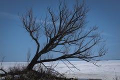 Δέντρο στη λίμνη Nipissing στοκ εικόνα