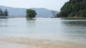 Δέντρο στη μέση του νερού και κύματα στην παραλία φιλμ μικρού μήκους
