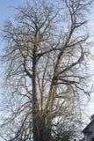 Δέντρο στη Μπρυζ Στοκ Φωτογραφία