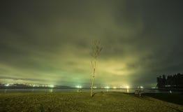 Δέντρο στη νύχτα στοκ φωτογραφίες με δικαίωμα ελεύθερης χρήσης