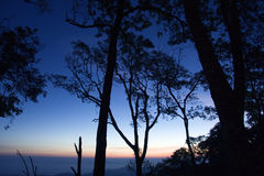 Δέντρο στη σκιαγραφία Στοκ Φωτογραφίες