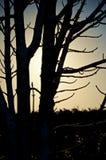 Δέντρο στη σκιαγραφία Στοκ Εικόνες
