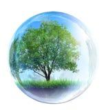 Δέντρο στη φυσαλίδα γυαλιού Στοκ Εικόνες