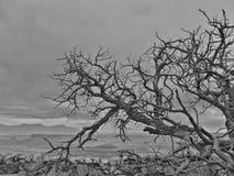 Δέντρο στη φύση Στοκ Φωτογραφία
