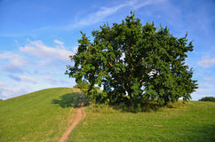 Δέντρο στη χολίνη Στοκ Εικόνες