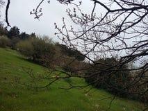 Δέντρο στη χλόη Στοκ Εικόνα
