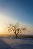 Δέντρο στις ακτίνες του ήλιου Στοκ Εικόνες
