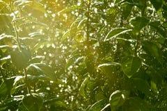 Δέντρο στις σταγόνες βροχής Στοκ εικόνες με δικαίωμα ελεύθερης χρήσης
