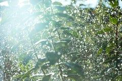 Δέντρο στις σταγόνες βροχής Στοκ φωτογραφία με δικαίωμα ελεύθερης χρήσης