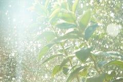 Δέντρο στις σταγόνες βροχής Στοκ φωτογραφίες με δικαίωμα ελεύθερης χρήσης