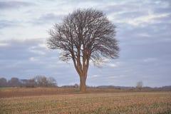 Δέντρο στον ήλιο Στοκ φωτογραφία με δικαίωμα ελεύθερης χρήσης