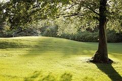 Δέντρο στον ήλιο Στοκ Εικόνες