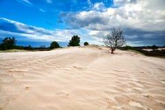 Δέντρο στον αμμόλοφο άμμου και το μπλε ουρανό Στοκ Φωτογραφία