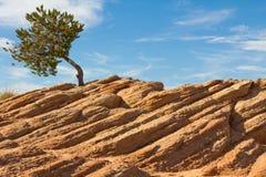 Δέντρο στον απότομο βράχο Στοκ εικόνα με δικαίωμα ελεύθερης χρήσης