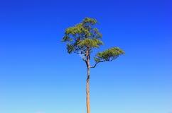 Δέντρο στον ουρανό Στοκ Εικόνες