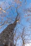 Δέντρο στον ουρανό Στοκ εικόνα με δικαίωμα ελεύθερης χρήσης
