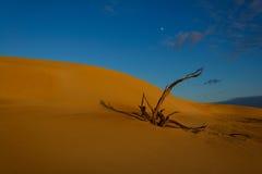 Δέντρο στους αμμόλοφους Στοκ Φωτογραφία