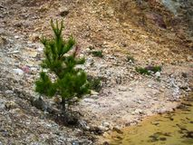 Δέντρο στο άγονο έδαφος Στοκ Εικόνα