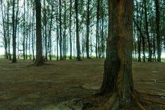 Δέντρο στο δάσος Στοκ Φωτογραφία