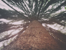 Δέντρο στο δάσος Sherbrooke στοκ εικόνες με δικαίωμα ελεύθερης χρήσης
