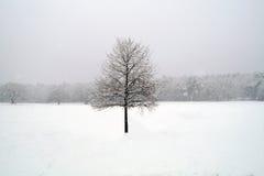 Δέντρο στο άσπρο χειμερινό τοπίο στοκ εικόνες