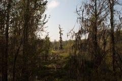 Δέντρο στο έλος στοκ φωτογραφία με δικαίωμα ελεύθερης χρήσης