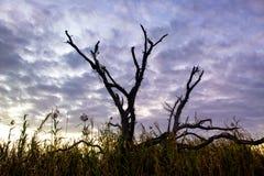 Δέντρο στο έλος στοκ εικόνα με δικαίωμα ελεύθερης χρήσης