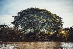 Δέντρο στο δασικό εκλεκτής ποιότητας ύφος Στοκ Εικόνες