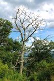 Δέντρο στο βουνό Στοκ φωτογραφίες με δικαίωμα ελεύθερης χρήσης